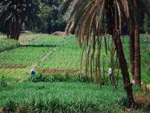 Auf Nile River kreuzen, die Landschaft, Süd-Ägypten lizenzfreie stockfotos