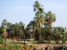 Auf Nile River kreuzen, die Landschaft, Süd-Ägypten lizenzfreie stockfotografie