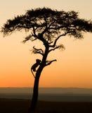 Auf Safari Stockfoto