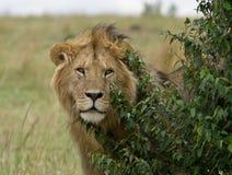 Auf Safari Lizenzfreies Stockbild