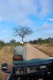 Auf Safari Stockbild
