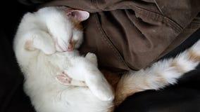 Auf sauberer Kleidung schlafende und möglicherweise träumende Katze Lizenzfreies Stockbild