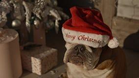 Auf schönem neuem Jahr fällt eine Bulldogge Weihnachtsroter Hut Hintergrund Weihnachtsbaum, Geschenke, hölzernes Portal stock video footage