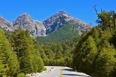 Auf Straßenrändern wachsen malerische Tannenbäume Lizenzfreies Stockfoto