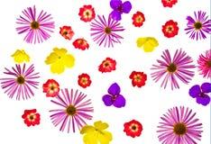 Auf weißen Hintergrundisolat verschiedener blüht ein Garten lizenzfreie stockbilder