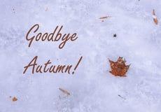 Auf Wiedersehen Herbst Orange getrocknetes Ahornblatt in der Lage des Eises auf dem Boden Konzept von ersten Frösten und von Schn lizenzfreies stockbild