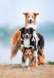 Aufbau der drei Hunde Stockfotos