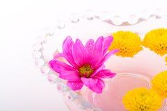 Aufbau mit Blumen. Stockfotos