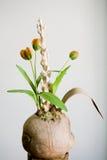 Aufbau mit Tulpen Stockfotos