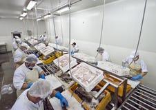 Aufbereitende Fabrik der Fische Stockfotos