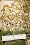 Aufbereitete Wannenpflanzer Stockbilder