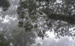 Auferstehungs-Farn auf Live Oak Tree im tiefen Süden Stockfotos
