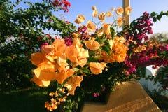 Auffallende Gelb-Blätter Stockfotografie