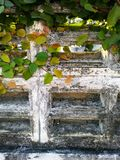 Auffrischungskriechpflanze, die alte Backsteinmauer klettert Lizenzfreies Stockfoto