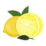 Auffrischungszitrone - exotische Frucht Vektor Stockfotos