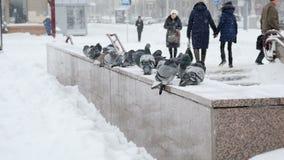 Aufgeblähte Tauben auf dem Geländer an einem kalten Wintertag in der Stadt stock video