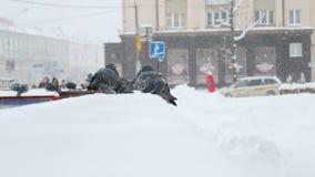 Aufgeblähte Tauben auf dem Geländer an einem kalten Wintertag in der Stadt stock video footage