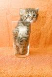Aufgefangenes Kätzchen Stockfotografie