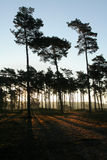 Aufgehende Sonne auf Wald Lizenzfreies Stockfoto