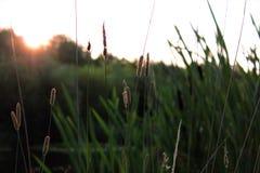 Aufgehende Sonne durch den See Lizenzfreie Stockfotos