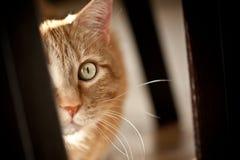 Aufgeregte Katze lizenzfreies stockfoto