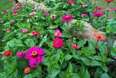 Aufgeteilter Lattenzaun und Blumen Stockbild