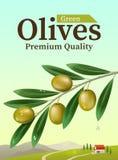 Aufkleber von grünen Oliven Realistischer Ölzweig Gestaltungselemente für das Verpacken Auch im corel abgehobenen Betrag Stock Abbildung