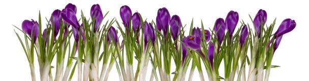 Aufkommende Frühlingsblumen stockfotos