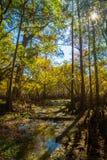 Auflockern des Frühlings-Sumpfs Stockbild