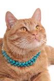 Aufmerksame Katze lizenzfreie stockbilder