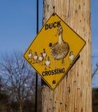 Aufmerksamkeit! Enten-Kreuzung Lizenzfreie Stockbilder