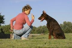 Aufmerksamkeit für Hund Stockbild