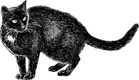 Aufpassen der schwarzen Katze Lizenzfreies Stockbild