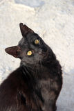 Aufpassen der schwarzen Katze Lizenzfreie Stockfotos