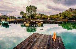 Aufpassende Enten der gelben Katze gehen durch die Fischfarm in Karuc, Skadar Stockfotografie