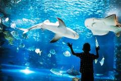 Aufpassende Fische des kleinen Jungen im Aquarium stockfoto