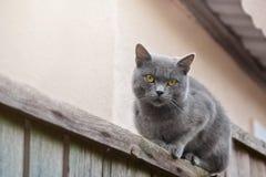 Aufpassende Umgebungen Moggy-Katze lizenzfreies stockfoto