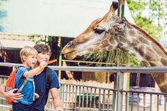 Aufpassende und Fütterungsgiraffe des Vaters und des Sohns im Zoo Glückliches Kind, das Spaß mit Tiersafari-park am warmen Sommer stockfoto