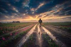Aufpassender Sonnenaufgang des Mannes im Tulpenfeld Stockbilder