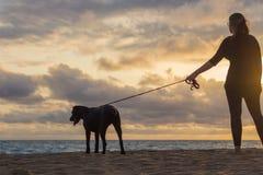 Aufpassender Sonnenuntergang der jungen Frau mit ihrem Hund Lizenzfreie Stockfotos