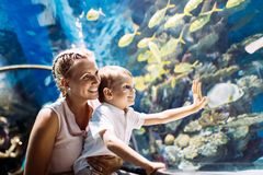 Aufpassendes Leben der Mutter und des Sohns Seeim oceanarium lizenzfreie stockfotos