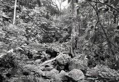 Aufrührerische mäßige Regenwaldvegetation in Schwarzweiss stockfoto