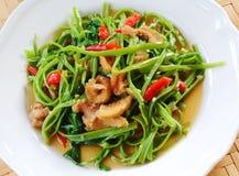Aufruhr Fried Water Spinach Stockbild