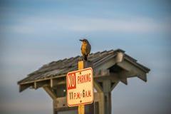 Aufsässiger Vogel auf einem Zeichen Stockbild