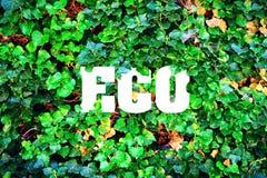 Aufschrift, Eco auf einem Hintergrund von grünen Blättern Das Konzept der reinen Natur Stockfotografie