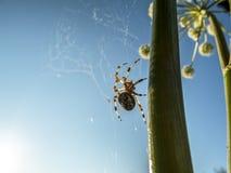 Aufsteigen herauf Spinne lizenzfreie stockfotografie