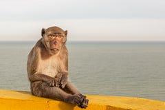 Aufstellung des Affen, der auf der Schiene der Treppe zu Khao Chong Kr sitzt Lizenzfreie Stockfotos