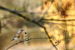 Aufstellung eines Vogels Lizenzfreies Stockfoto