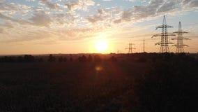 Aufstieg über Feld der getrockneten Sonnenblume stock footage