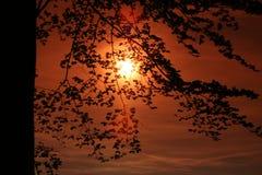 Aufstieg Sun hinter den Bäumen Stockbild